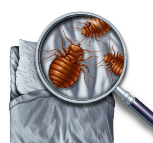 south gate bed bug control